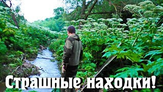 Страшные находки по берегу реки. Кости