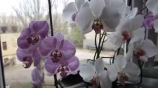 Мой уход за орхидеями.(11.04.2014., 2014-04-13T12:52:57.000Z)