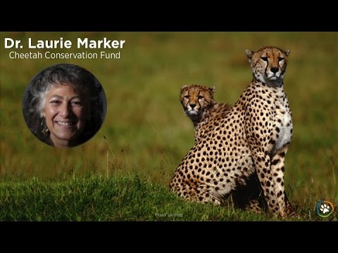 Cheetah Conservation Fund · Dr. Laurie Marker · Expo 2014