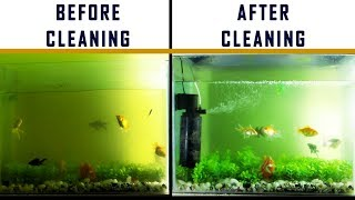 HOW TO : DIY EASY FISH TANK & FILTER CLEANING