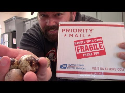 Mysterious Box Full Of Strange Looking Eggs Showed Up Unexpected!
