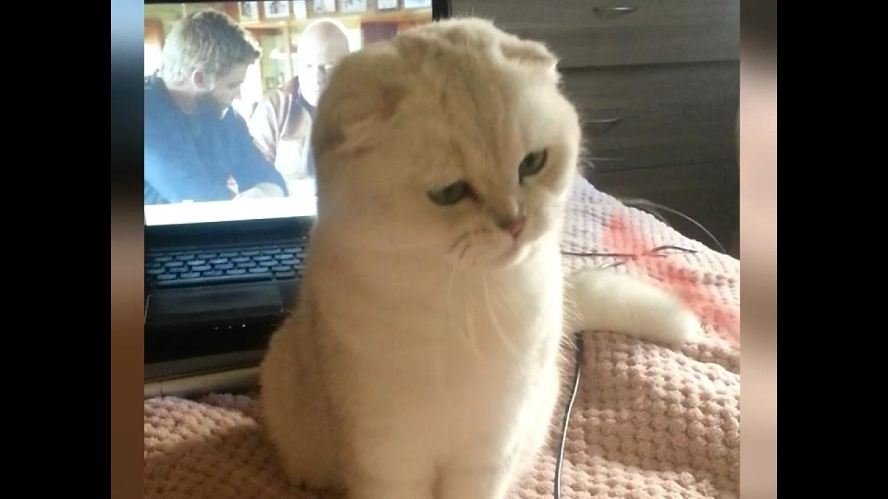 Корм, наполнитель и другие товары для кошек — интернет зоомагазин « ёжкин кот». Корм для кошек — сухой,. Санкт-петербург. Контакты · доставка. Go!. (гоу). Повседневный корм go!. (гоу) для кошки. Код: 02013. Вес: 1,82кг.