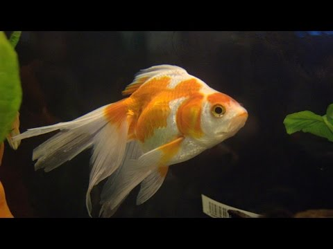 Annonce Poissons Aquarium Nabeul Tunisie - GoldAnnonces #animaux