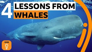 What whales can teach us about living our best life | BBC Ideas