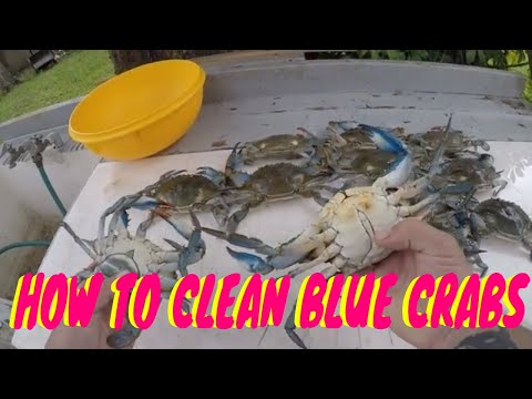 HOW TO CLEAN BLUE CRABS