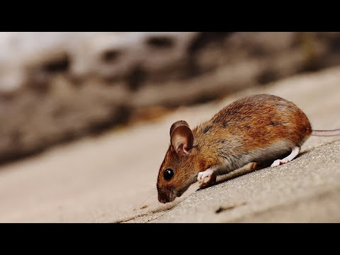 NSW government slammed over mouse plague response