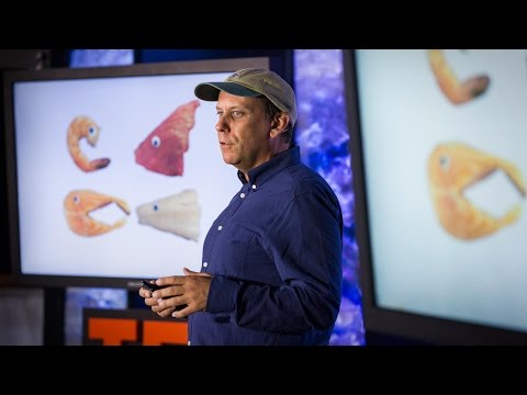 The four fish we're overeating -- and what to eat instead | Paul Greenberg