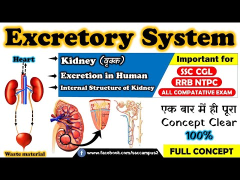Excretory System | Kidney Structure & Function | Excretion in human | dialysis | SSC CGL, RRB NTPC