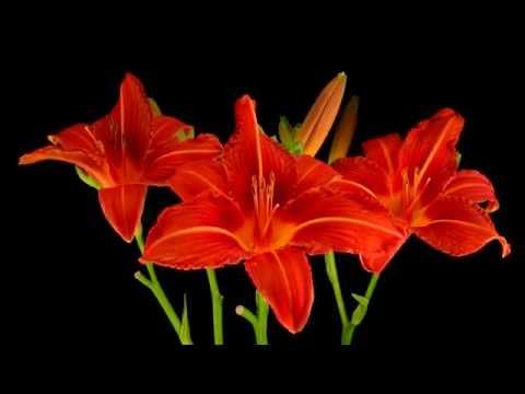 Природа, как растут цветы, удивительно красиво
