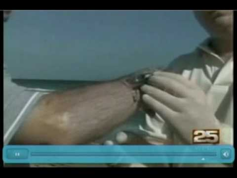 Safe Sea on WPBF Florida , Jellyfish Protection from Nidaria