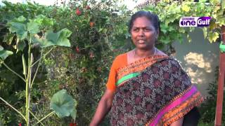 Doha Magazine | Mariyamma Thomas produce organic vegetables in Qatar Epi13 Part3