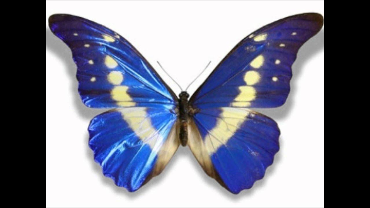 Schmetterling on topsy.one
