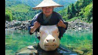 【Shyo video】560元買個40斤重的牛頭,用大鐵鍋燉8小時,抱著直接開啃,吃著真爽