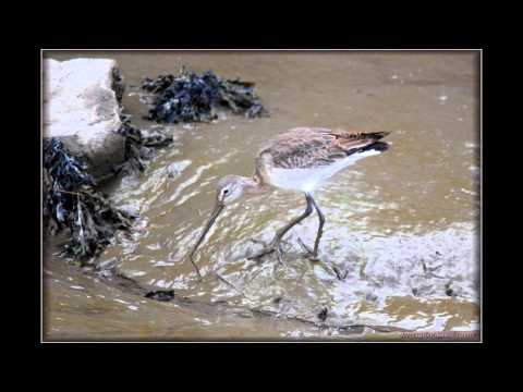 Wildlife for fun 'video clips of Wildlife in west wales