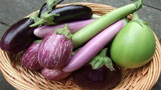 9 Makanan penurun kolesterol tinggi dengan cepat
