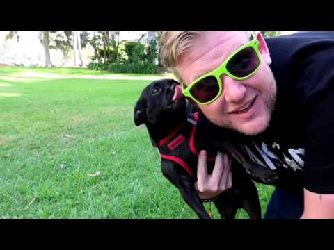 Daze with JAH the Chihuahua - Jah's Favorite Activity