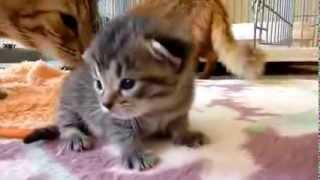 Мама-кошка и котята.