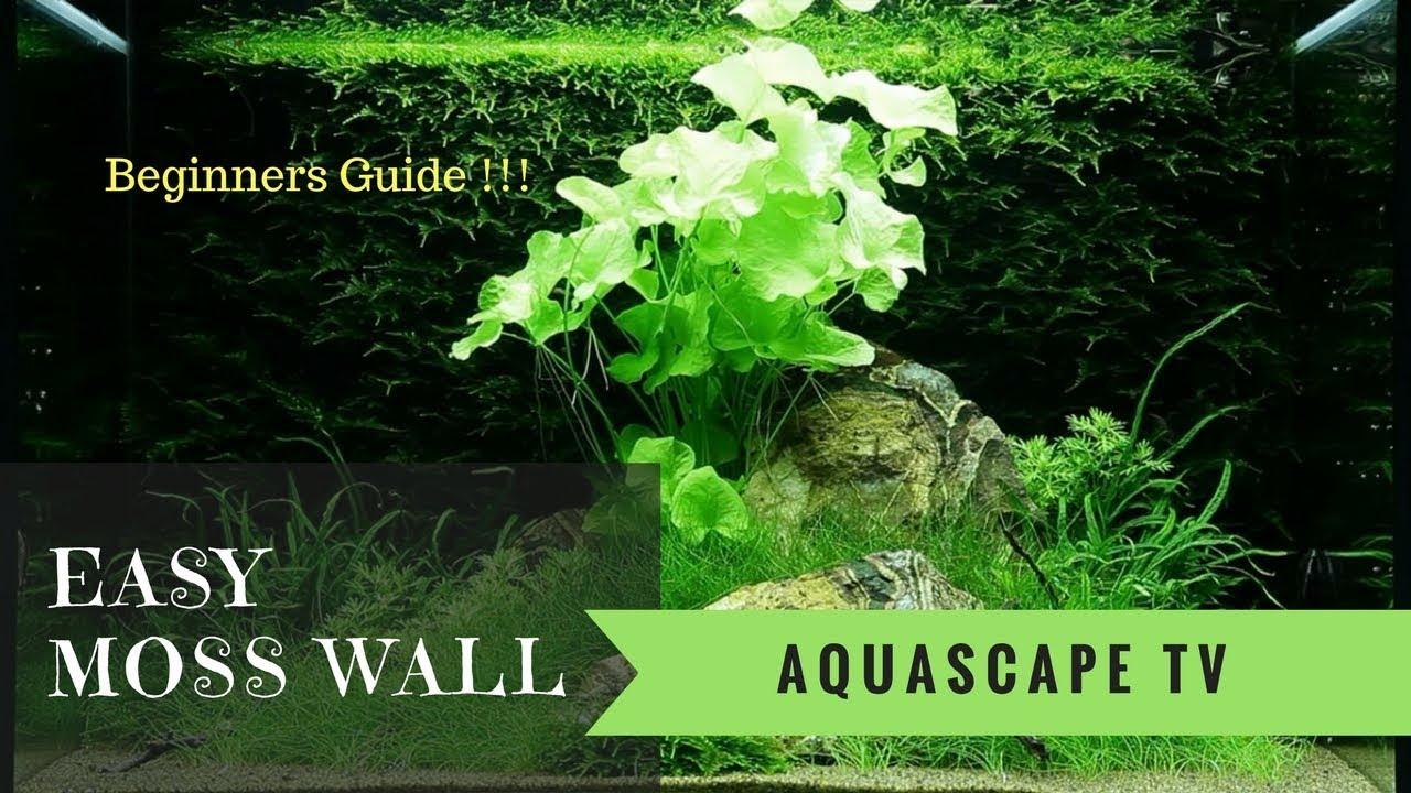 Easy Moss Wall Aquarium For Beginners Aquascape Tv Youtube