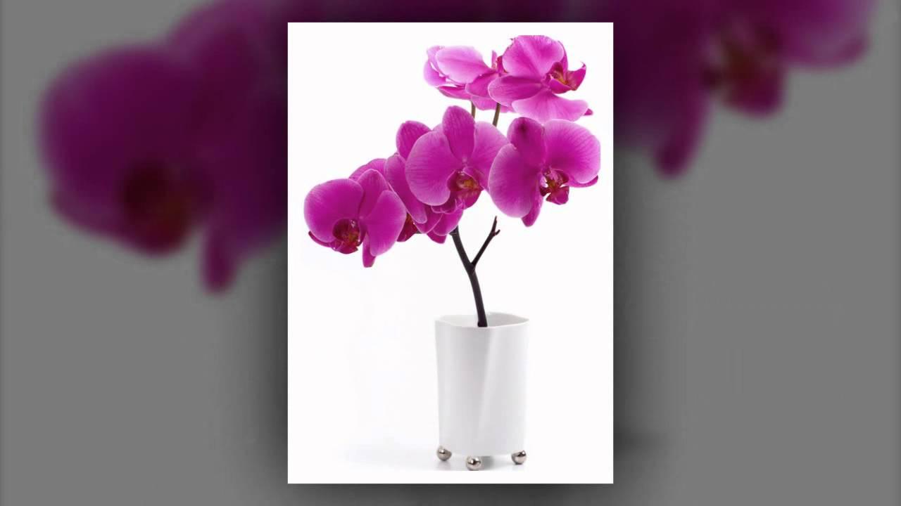 arroser des orchid es en pot youtube. Black Bedroom Furniture Sets. Home Design Ideas