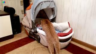 Кошка первый раз видит младенца.