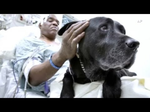 Guide dog saves blind man after subway fall