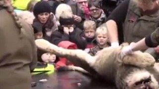 Толпы датчан пришли посмотреть на расчленение льва в зоопарке