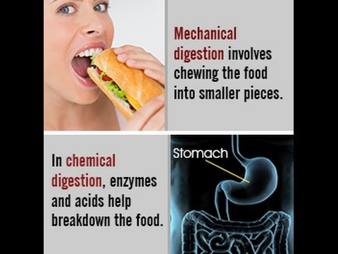 how does mechanical digestion enhance chemical digestion The process of digestion starts in the mouth, although fat does not get broken down at this point mechanical digestion occurs as your teeth grind food and break it apart into smaller pieces chemical digestion takes place as lingual lipase, an enzyme in your saliva, begins to emulsify fat and saliva moistens the food to make it easier to swallow.