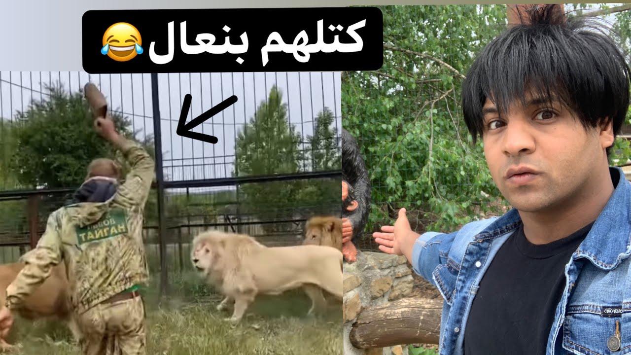 رحت حديقة حيوانات  انصدمة _ رجل يضرب اسد بنعال 😂 _ راحت الهيبة | مصطفى ستار