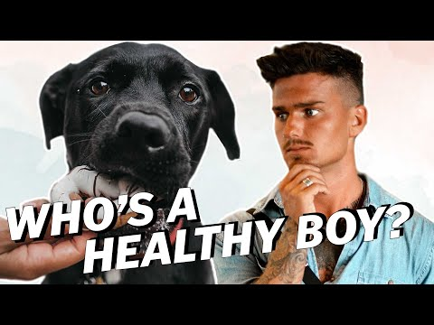 What Is A HEALTHY DIET For A DOG?