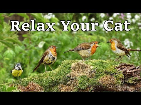 Calming Videos to Relax My Cat - Relaxing Videos for Cats to Relax at Home : The Bird Garden