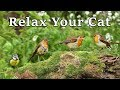 Calming Videos for Cats - Relaxing TV for Your Cat to Relax at Home : The Bird …