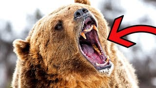 Most DANGEROUS Animals in the Arctic