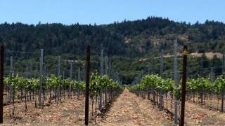 B-Line Palisade Wine Tour Video Thumbnail