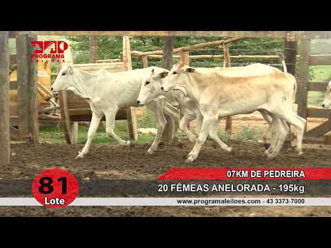 Lote 81