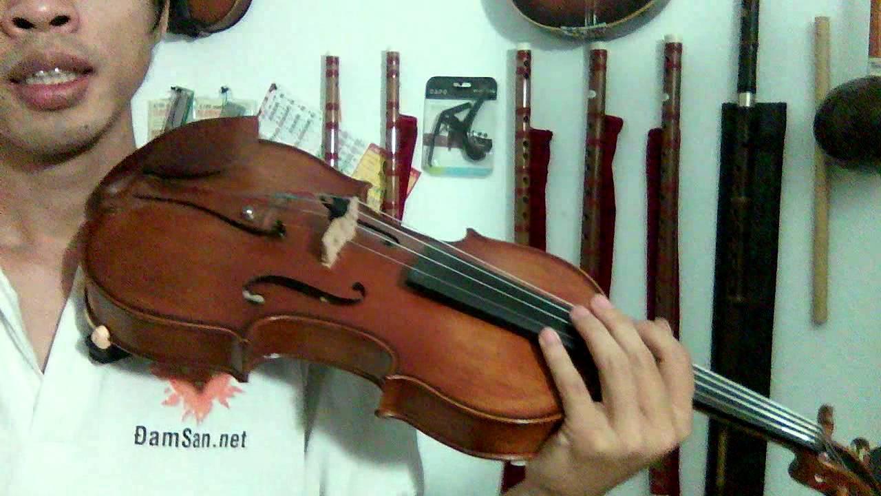 Violin tay
