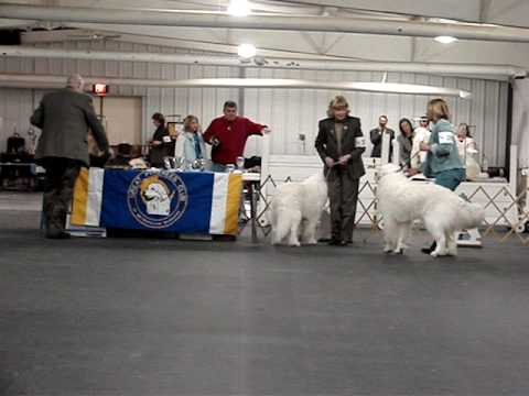 Great Pyrenees Club of Metropolitan Milwaukee