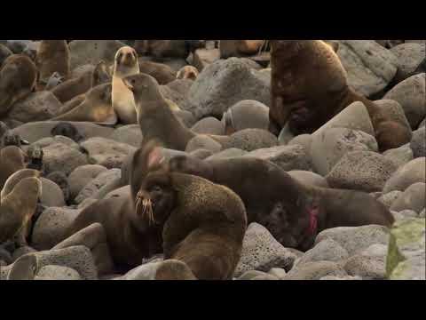 Defender of the Fur Seal- Henry Wood Elliott  (Documentary)