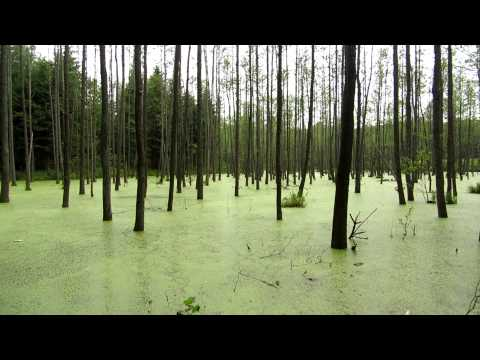 Swamp, Kętrzyn, Warmian-Masurian, Poland, Europe