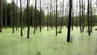 Swamp, Ketrzyn, Poland, Europe