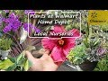 Shopping For Plants at Walmart & Home Depot