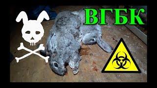 ВГБК: худший КОШМАР кроликовода (16+)