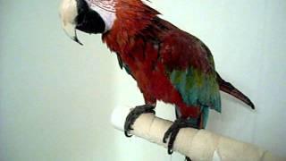 Monty bath time