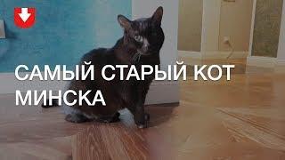 Самый старый кот Минска