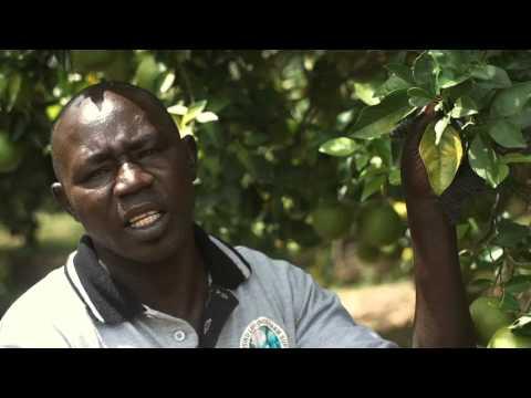 Tree Nursery training video ZOA Uganda