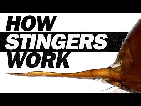 Erstmals in Zeitlupe gefilmt: So raffiniert stechen Ameisen