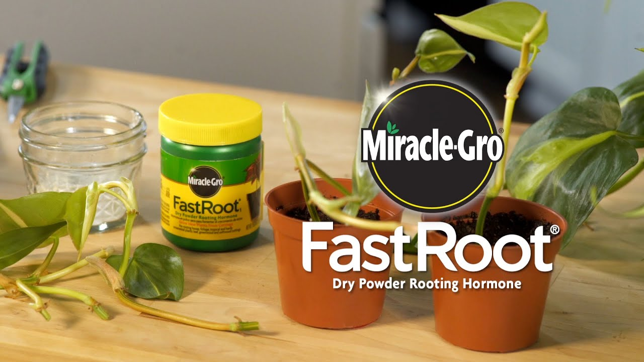 How to Use Miracle-Gro® FastRoot® Dry Powder Rooting Hormone