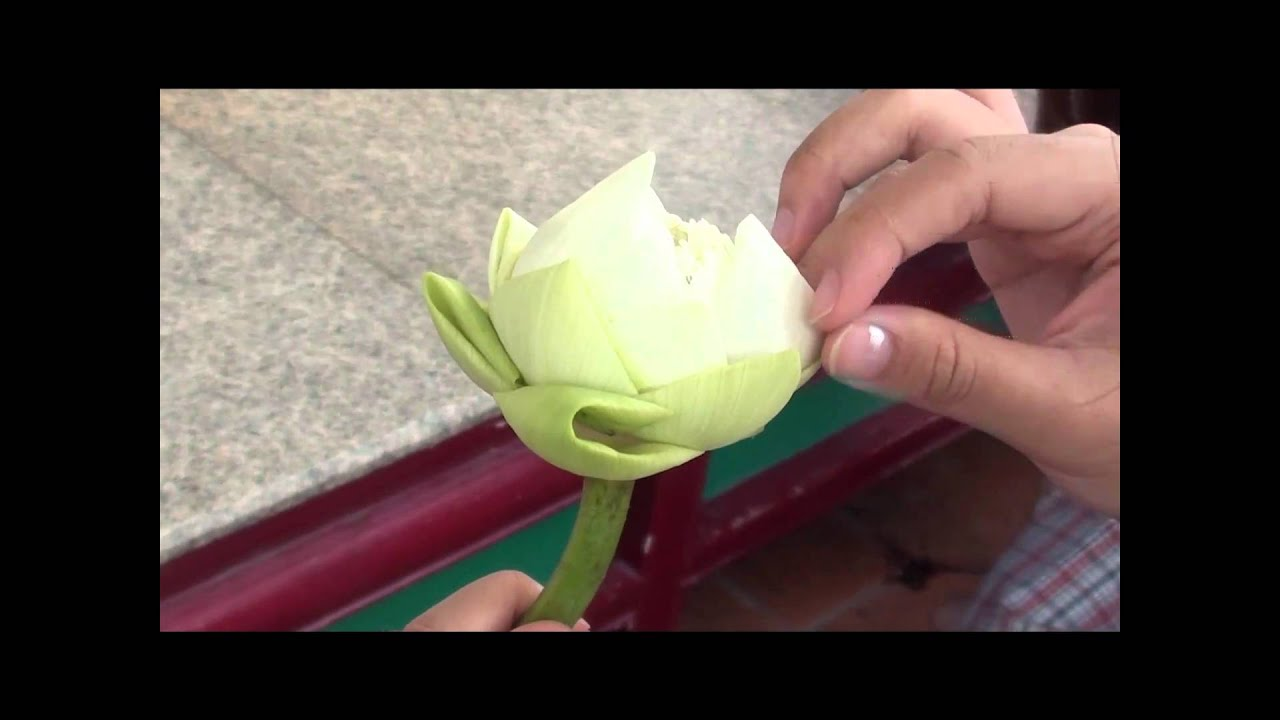 Lotus Flower At A Buddhist Temple Youtube