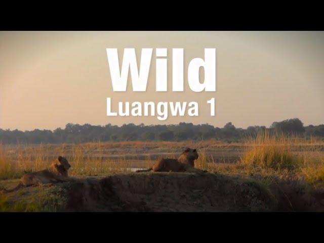 Wild Luangwa...Part 1