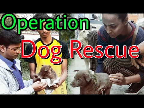 Live rescue of Dogs puppies in Allahabad prayagraj by path pradarshak society Kshama Jan Sewa Samiti