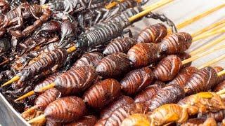 Top 5 Weirdest Foods in CHINA
